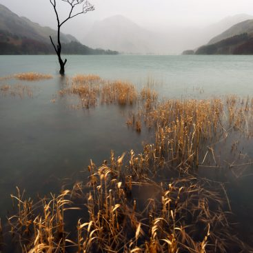 Lone Birch Tree, Buttermere, Lake District