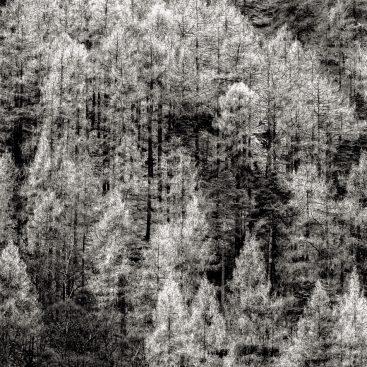 Burtness Wood, Buttermere, Lake District