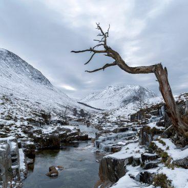 Haunting Tree, River Etive, Glencoe, Scotland
