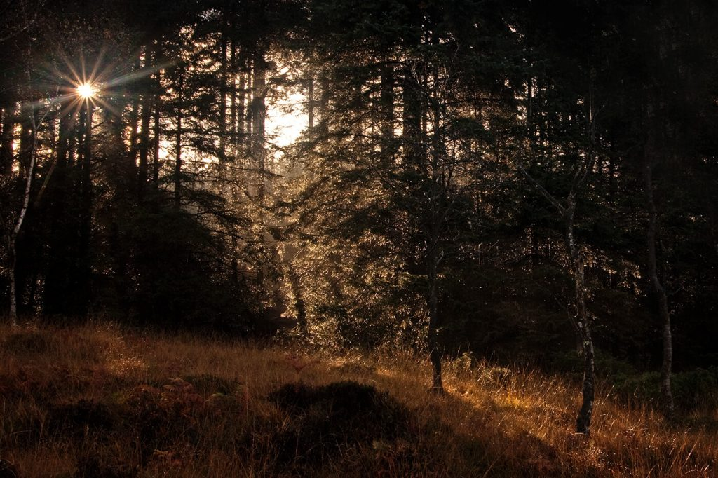 Image Two: Grizedale Forest - Original edit from October 2011