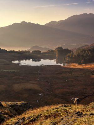 Blea Tarn, Langdales, Lake District