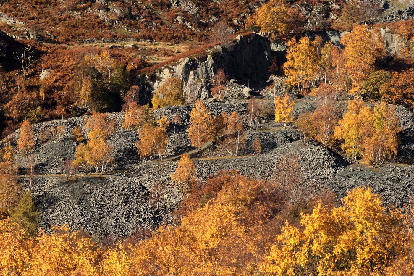 Autumn's Fiery Colours, Hodge Close Quarry, Lake District