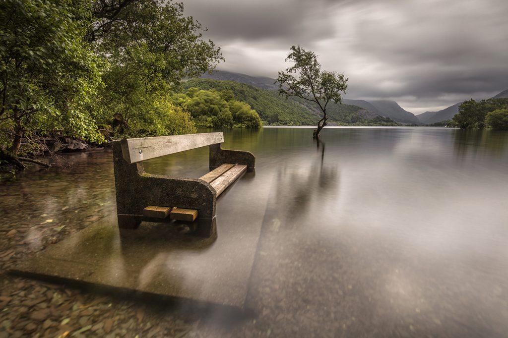 Lone Tree, Llyn Padarn, Llanberis, North Wales