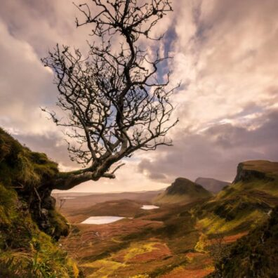 Hanging On, Lone Tree, Quiraing, Isle of Skye