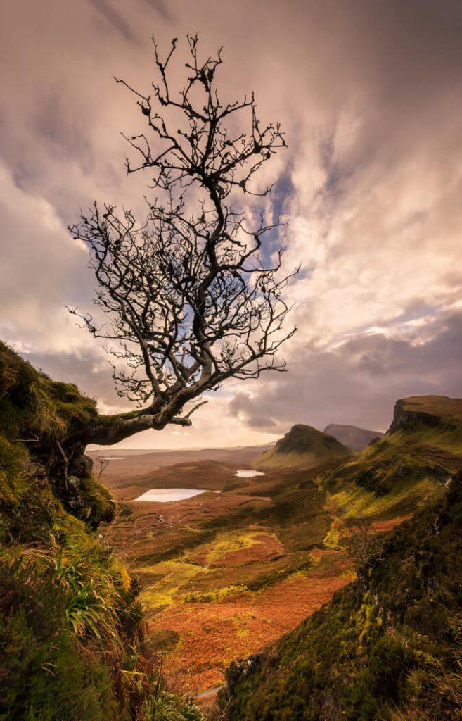 Hanging On, Lone Tree, Quiraing, Skyesle of Skye