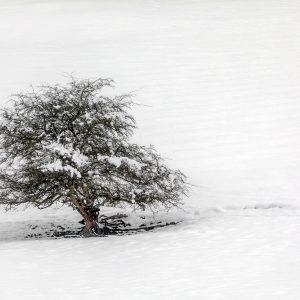 Lone Tree, Winter Wonderland, nr Ullswater, Lake District