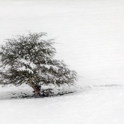 Lone Tree, Winter Wonderland, nr Ullswater, Lake District