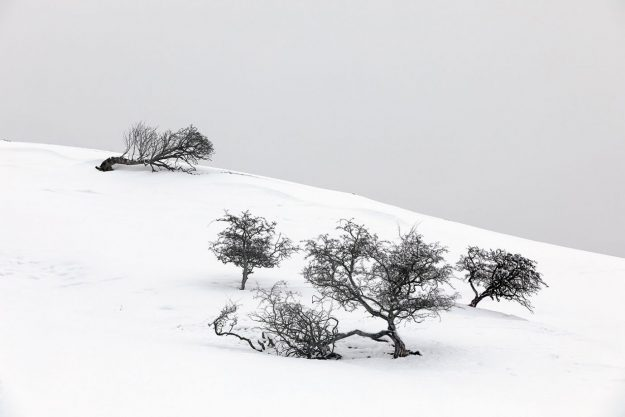 Trees In the Snow, nr Ullswater, Lake District
