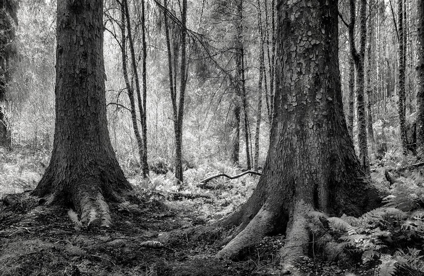 Barcaldine Forest, Argyll, Scotland