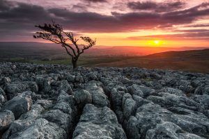 Hawthorn Tree, Twistleton Scar, Yorkshire Dales
