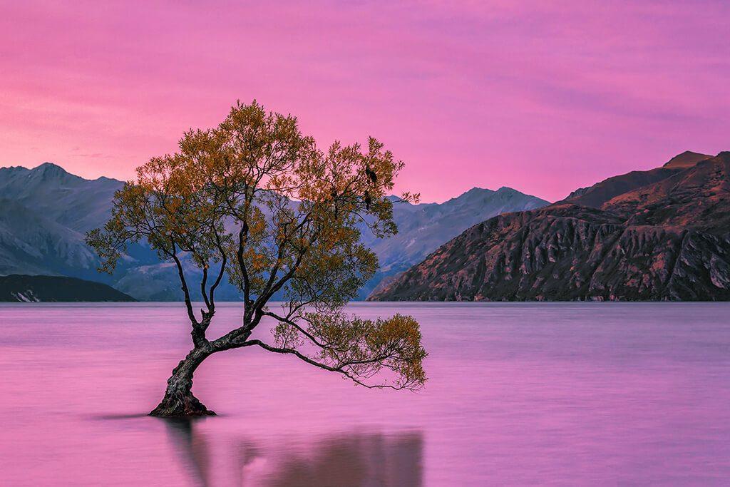 Lone Tree, Wanaka, New Zealand
