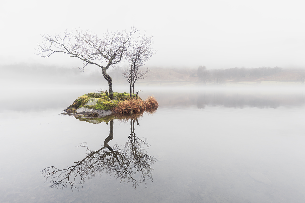 Tree In The Mist, Rydal Water, Lake District