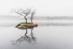 Lone Tree, Rydal Water, Lake District