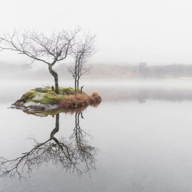 Lone Tree, Rydal Water, Lake District