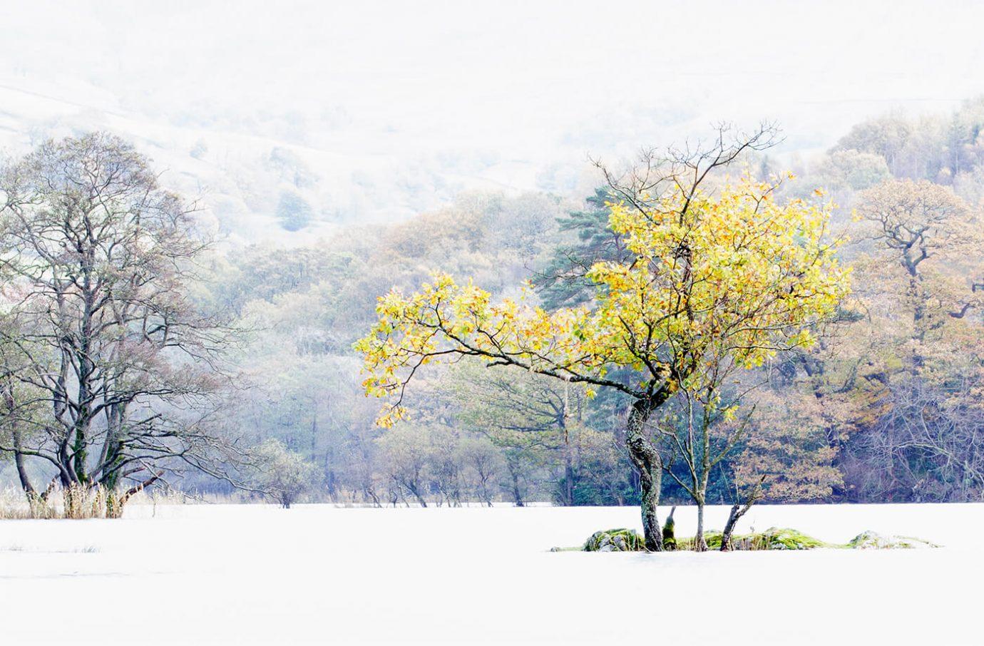 Rydal Tree, Rydal Water, Lake District