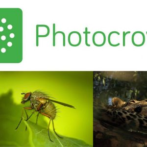 Melvin Nicholson – Expert Photography Judge for Photocrowd
