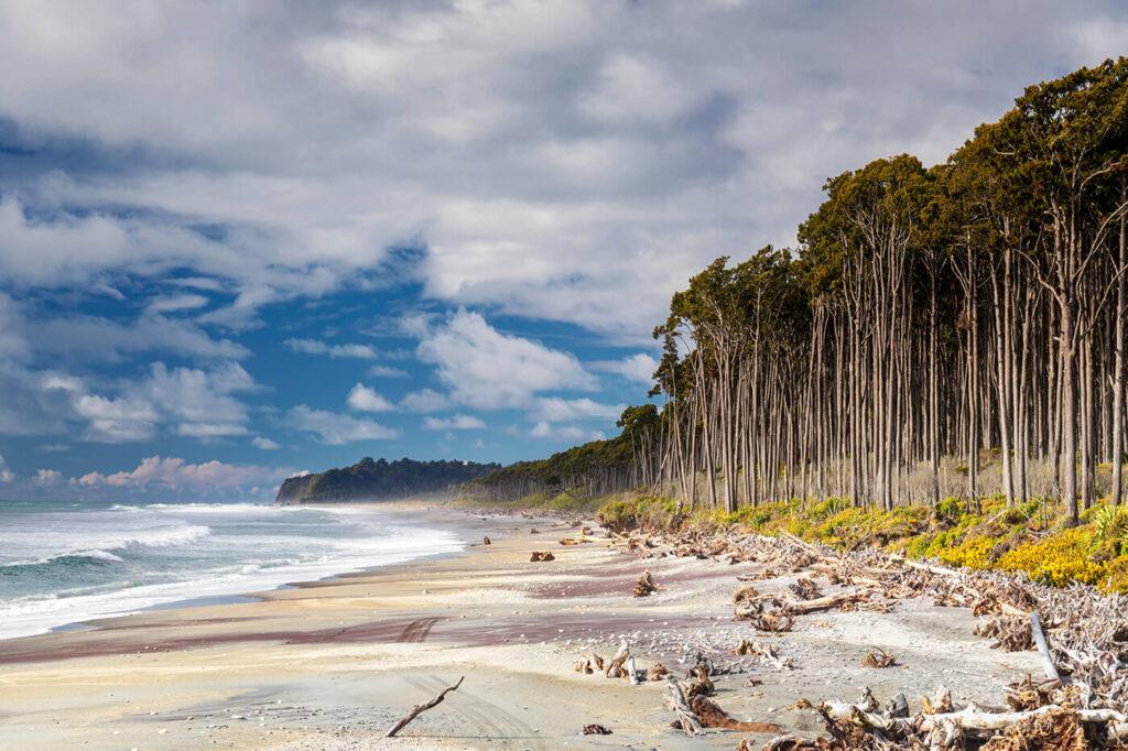 Rimu Rainforest, Bruce Bay, New Zealand