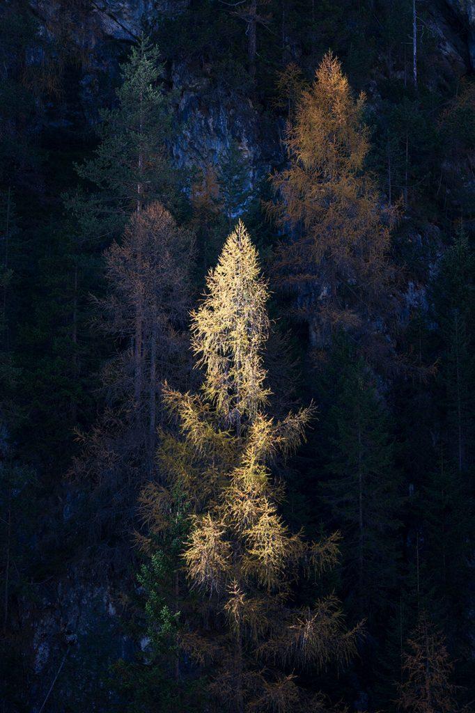 Sunlit Trees, Lago di Landro, Dolomites, Italy