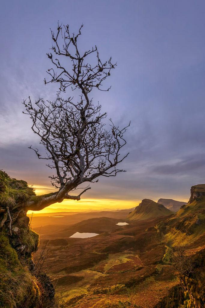 Lone Tree, Quiraing, Isle of Skye, Scotland
