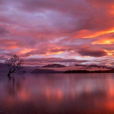 Sunrise, That Tree, Wanaka, New Zealand