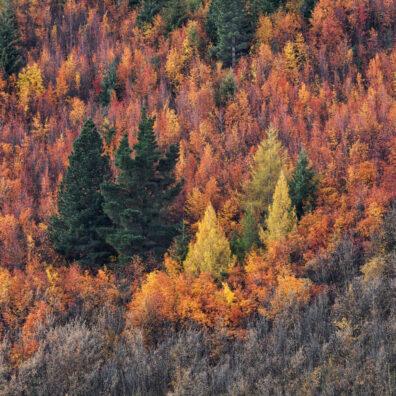 Autumn Colours, Arrowtown, New Zealand