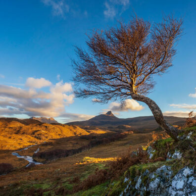 Lone Tree, Stac Pollaidh, Assynt, Scotland