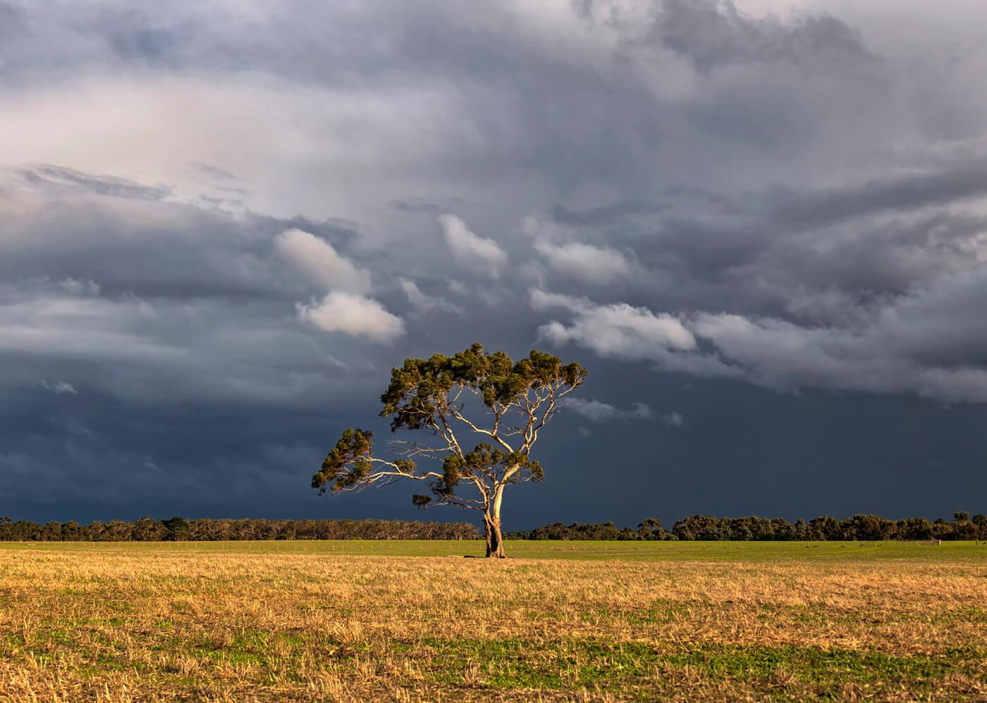 Lone Tree, Great Ocean Road, Australia
