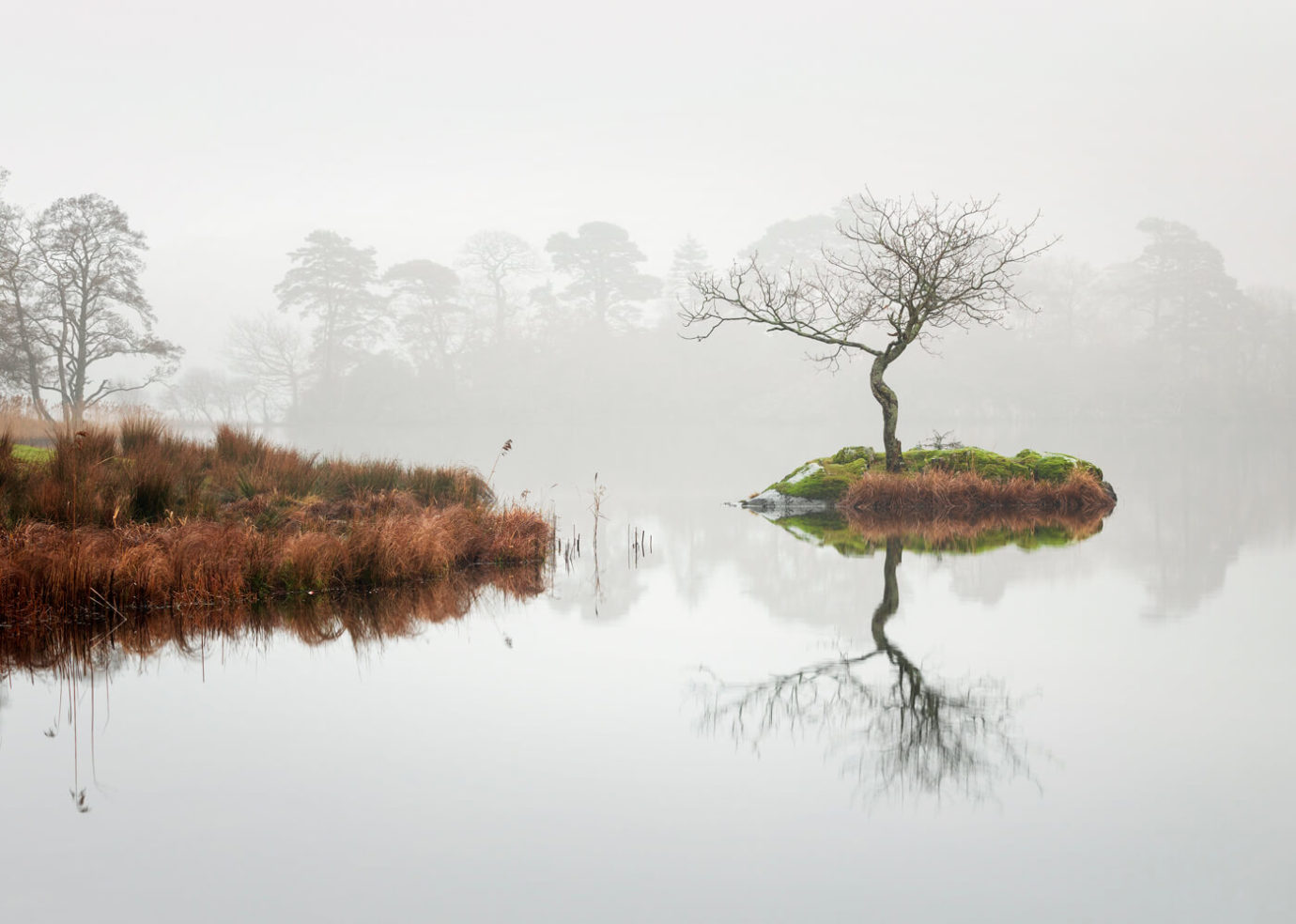 Misty Rydal Tree, Lake District