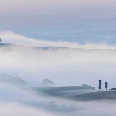 Trees In The Mist, Belvedere, San Quirico d'Orcia, Tuscany, Italy