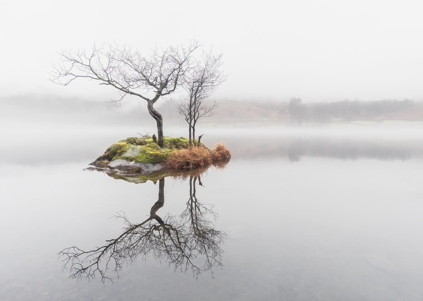 Rydal Tree, Lake District