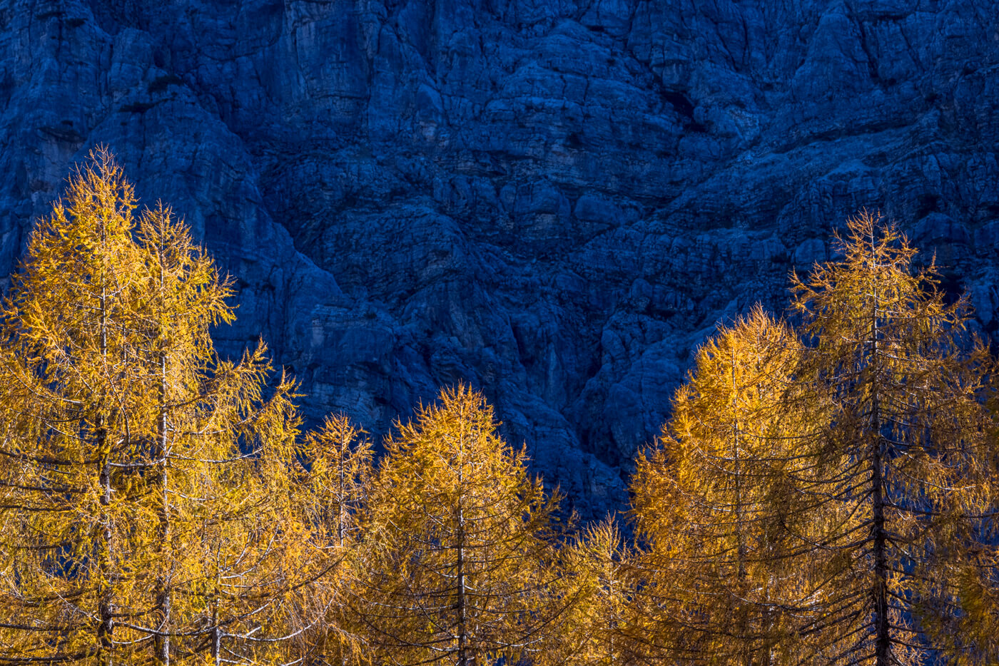 Autumn Golden Larches, Vrsic Pass, Slovenia