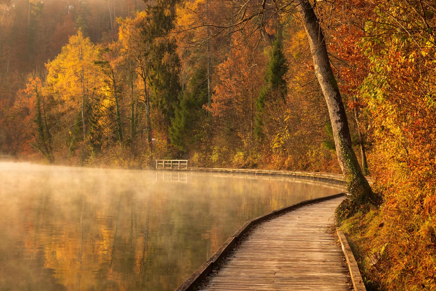 Autmn Gold, Lake Bled, Slovenia