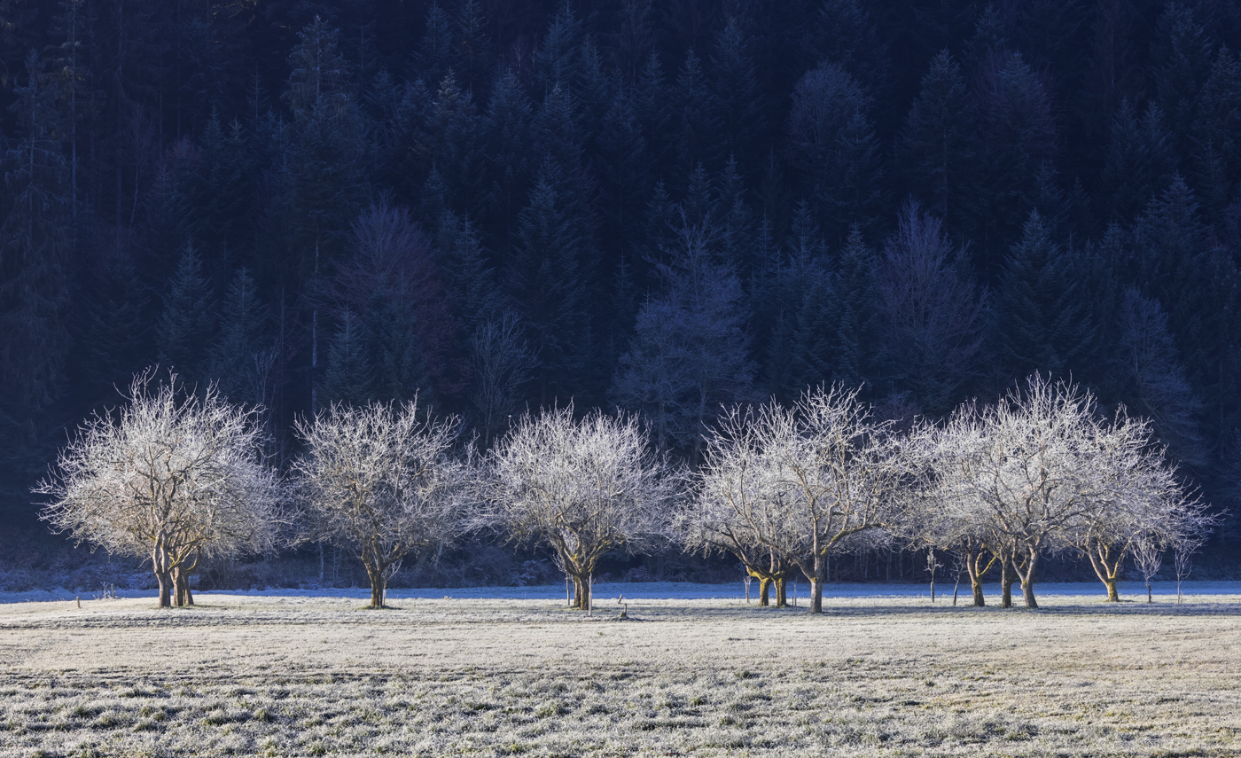 Hoar Frost Trees, Dolenja Vas, Slovenia